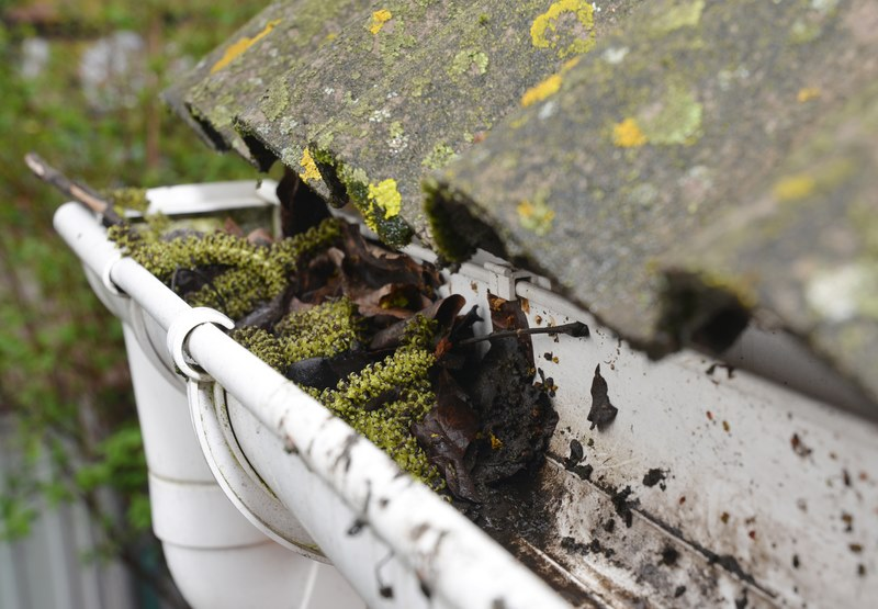 dirty gutter with leaves and green plants
