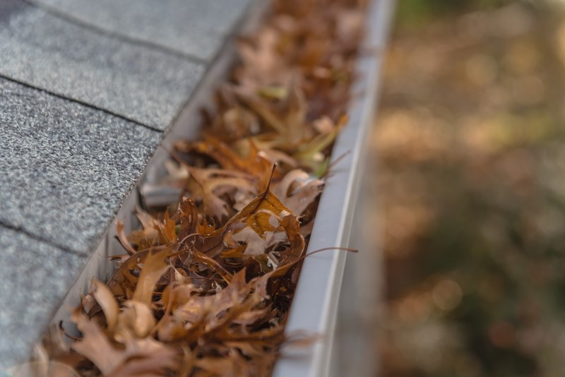 blocked gutter full of autumn leaves